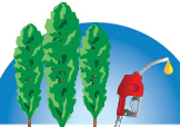 Managing Poplar and Willow for Environmental Benefits and the Renewable Fuels Industry  —  April 11-13, 2016   —   Portland, OR