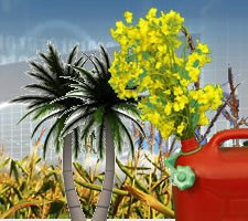 Biofuels Trading in Asia July 7-8 Singapore