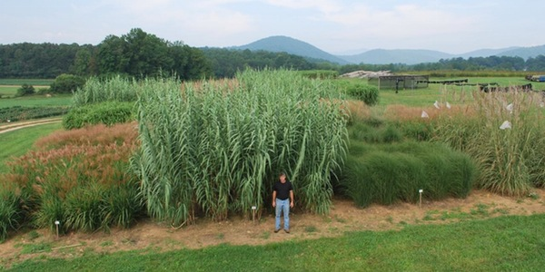 2015 Bioenergy Field Day  — August 27 — Mills River, NC