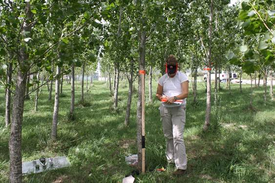WEBINAR:   Short Rotation Woody Crops for Phytoremediation Applications    April 30, 2014 2:00 pm US/Eastern