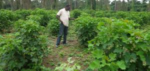 Jatropha site inspection by Mr. Oladunjoye A. Waleola at Osun State. (25/07/2012).