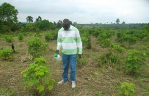 Oladunjoye A. Waleola Spraying nutrients on Jatropha plants at Ondo State (07/08/2013).